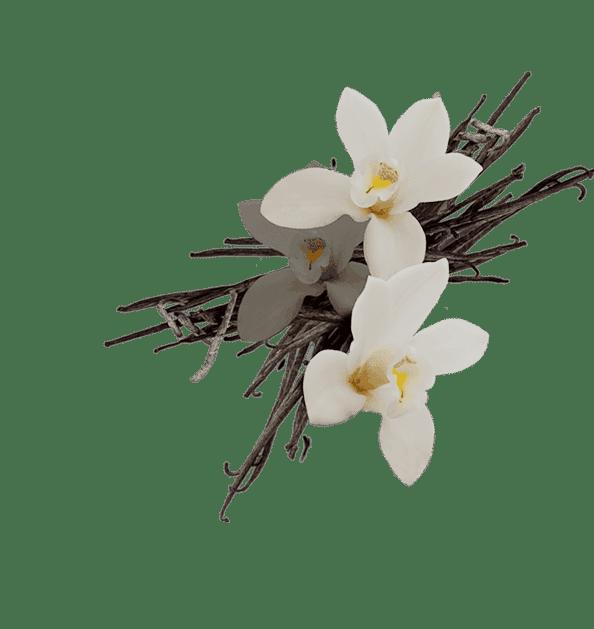 Perfume Finder 10